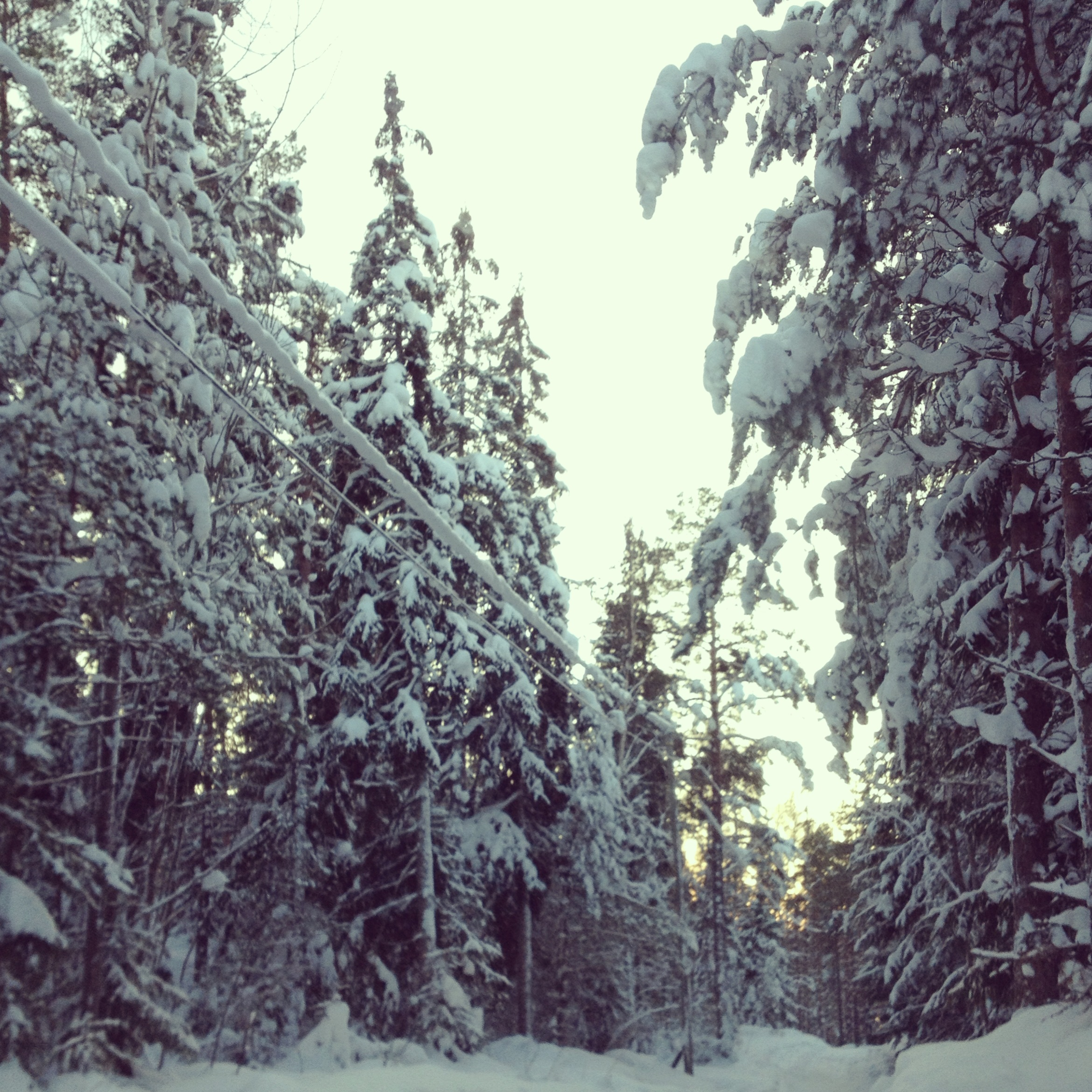 """""""The forests in Finland. It does not matter if it is winter or summer, the forest is always calm and silent. The only place where you can truly hear your own thoughts."""" Jonna Saarinen"""